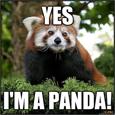 Red Panda Meme - red panda meme 28 images cute red panda memes www
