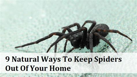 how to keep spiders out of the house 9 natural ways to keep spiders out of your home natural medicine box