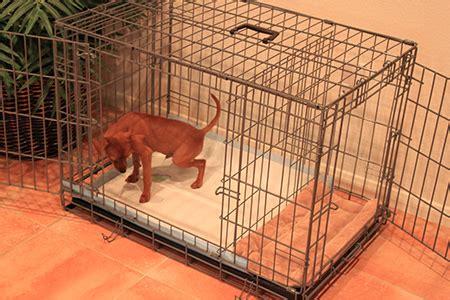 modern puppy apartment potty puppy apartment ptpa modern magazine