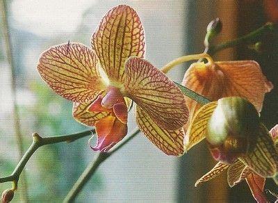 Comment Rempoter Une Orchidée by Les 25 Meilleures Id 233 Es Concernant Rempotage Orchid 233 E Sur