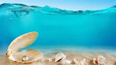 wallpaper hd 1920x1080 sea 1920x1080 sea seashell ocean 1080p full hd wallpapers