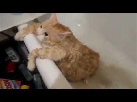 nackt in der badewanne fette katze kommt nicht aus badewanne sehr lustig