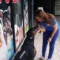 puppy store at doral puppy store at doral doral fl united states