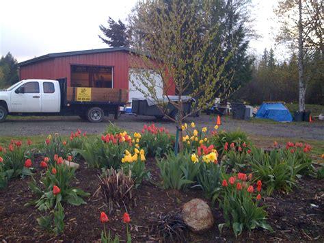 lawn overseeding olympia wa organic fertilizing lacey wa