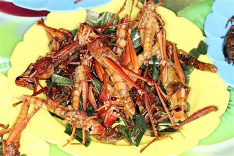 Would You Eat This Grasshopper Snack by Feasting On Locusts A Recipe From Moshe Basson S Kitchen