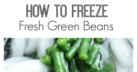 how to freeze fresh green beans fresh green and green beans