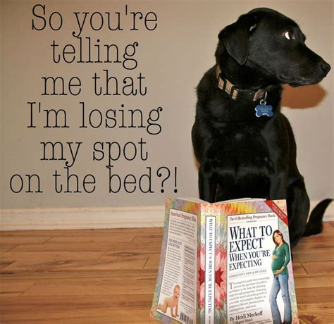 pregnancy announcements with dogs 25 best ideas about baby announcements on baby announcements