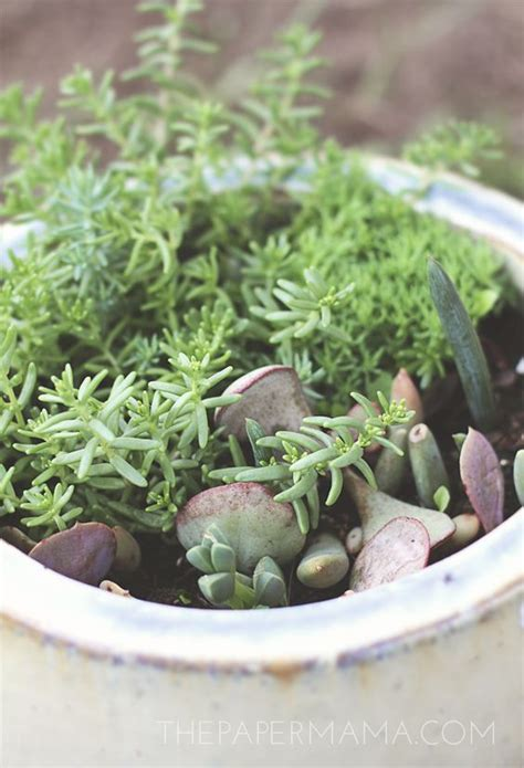 Propagating Succulents Succulents And Plants On - how to propagate succulents from leaves terrarium