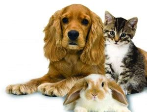 Would you know what to do in an emergency if your pet had an accident