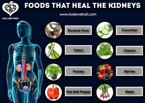 Foods To Detox Liver And Kidneys by For The Kidneys Kidney Friendly Recipes
