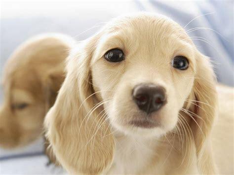 imagenes de animales lindos fotos de animales perritos