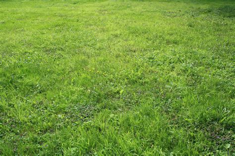 Grass Pictures by File Desert De Retz Grass Jpg