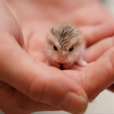 What. Is. This . Dwarf hamster baby.   For little things