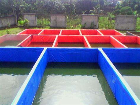 Suplemen Ikan Lele cara budidaya ikan lele di kolam terpal lengkap untuk pemula