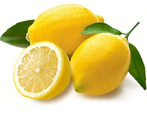Bebih Biji Jeruk Lemon Import tanaman jeruk lemon impor bibitbunga