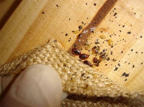 bed bug treatment nyc top 3 reasons why most bed bug treatments fail bedbugs