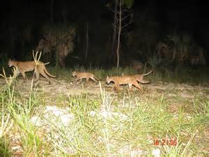 family of florida panthers