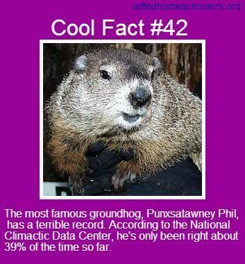 groundhog day trivia groundhog day trivia 28 images animals infographics