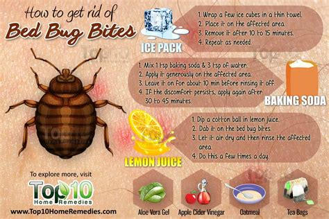 rid  bed bug bites top  home remedies