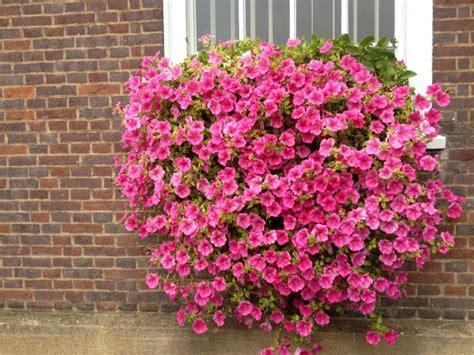 fiori per balconi fiori da balcone consigli pratici per un balcone fiorito