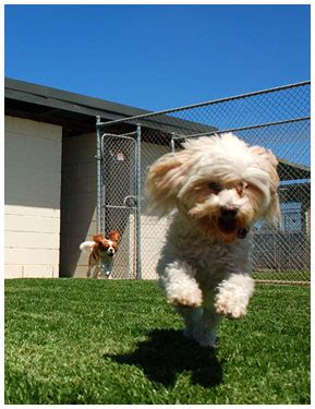 boarding a puppy what to look for in a boarding facility