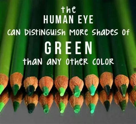 facts about the color green photos facts about the color green women black