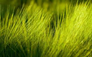 green grass wallpapers and images wallpapers pictures photos