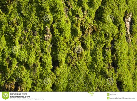 mossy green mossy green stock photo image of plant texture mossy