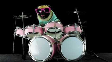 pugs and drummers someone s made a gif that goes on for 1 000 years metro news