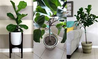House Plant Pots Home Project Pots For Indoor Plants Within The Grove