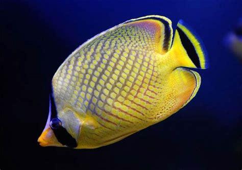 imagenes animales con escamas peces