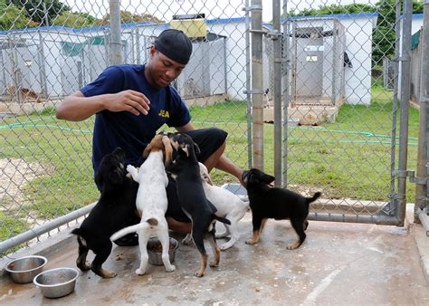 animal shelter puppies getting started as an animal shelter volunteer