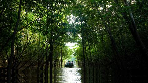 amazon de amazon tours brazil matuet 233