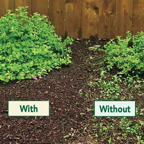coffee grounds in the vegetable garden gardener s gold premium compost gardens alive