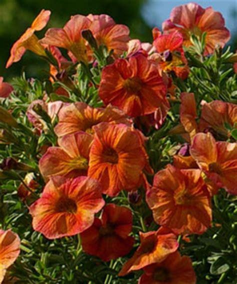 Garten Pflanzen Sträucher by Pflanzen In Nanopics Bild Str 227 Ucher Garten Im Sommer In