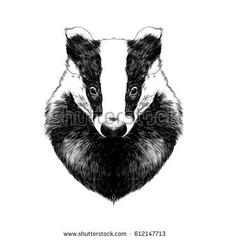 badger stock images royalty free images amp vectors