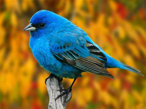 sujith spot colourful birds hd wallpapers
