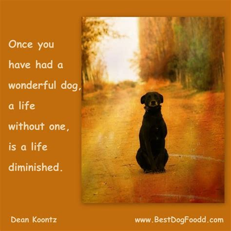 poems about dogs dying best 25 poems ideas on loss poem rainbow bridge and rescue