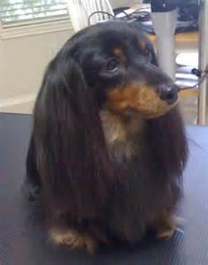 Hollywood Mobile Dog Groomer Long Island Ny » Home Design 2017