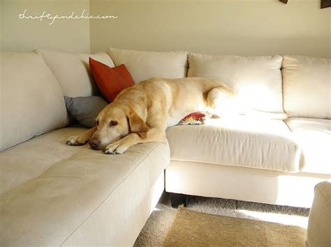 remove cat hair from couch 17 best ideas about cleaning dog hair on pinterest dog