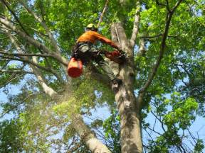 Tree Service In Iron Tree Service Wenham Ma 01984 Angies List