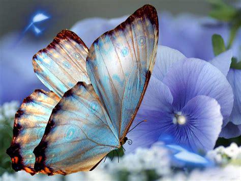 imagenes de mariposas bonitas y fondos de pantalla de fondo de pantalla de mariposas hermosas imagui