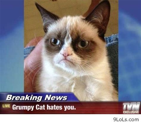Create A Grumpy Cat Meme - 132 best just trying to make you smile images on pinterest