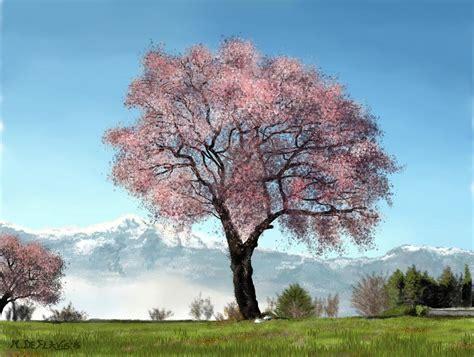 ciliegio in fiore ciliegio in fiore vendita quadro pittura artlynow