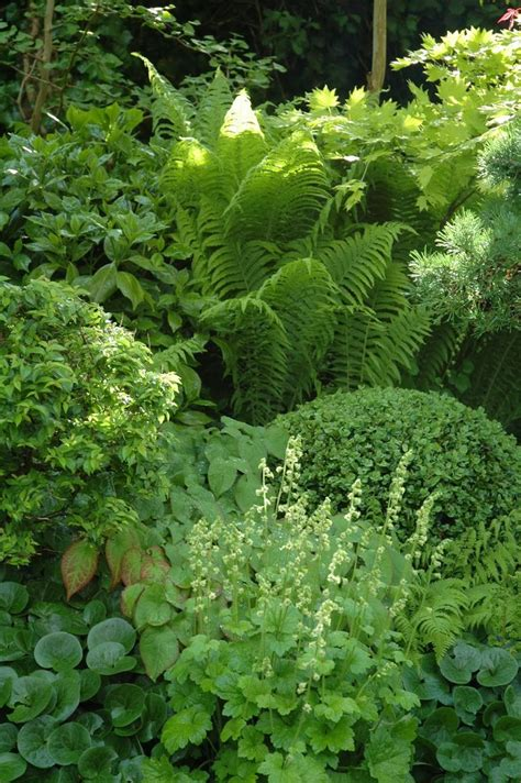 shade garden with hosta fern lady s mantle boxwood