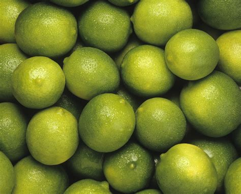 fruit tree supplies lime bearss tahitian