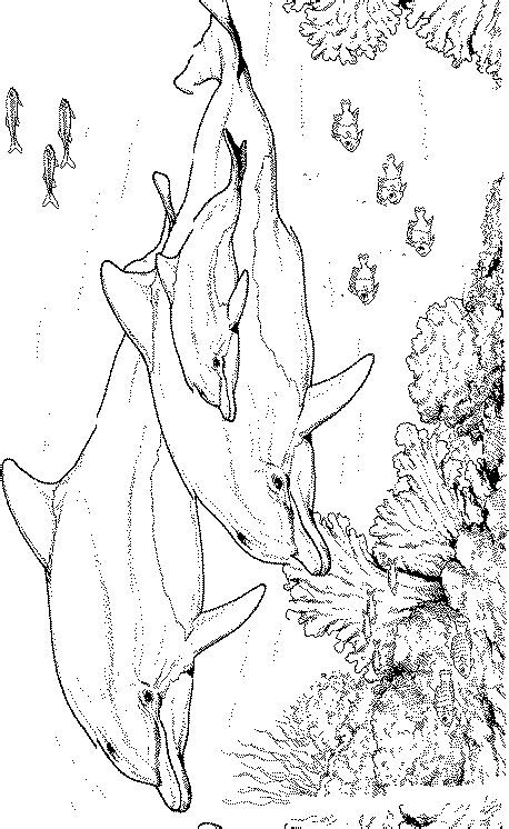 animal coloring pages dolphin dolphin coloring page animal coloring page picgifs com