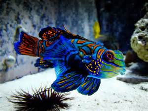 October 2013 ~ Exotic Freshwater and Saltwater Fishes