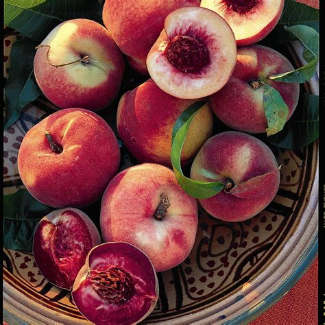 Patio Bushes Quality Fruit Trees And Soft Fruit Plants For Sale Buy