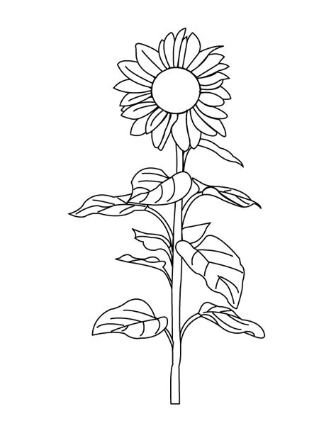 coloring outlines az coloring pages